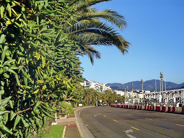Des palmiers tout au long et les montagnes et toile de fond - Palms all along the way and mountains in the background