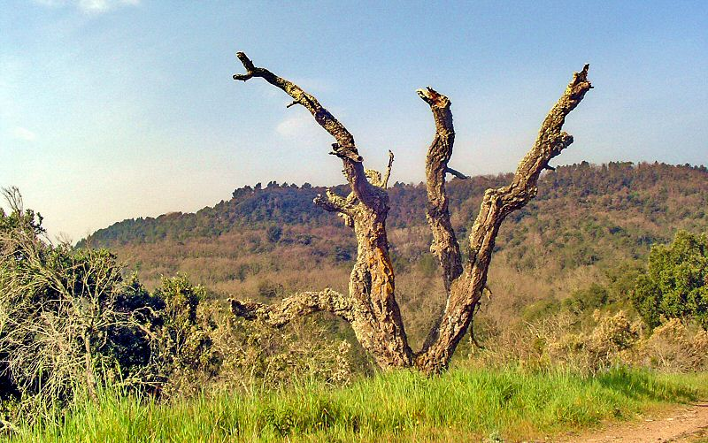 Si vous voyez cette sculptute c est que vous êtes passé - If you see this nature art, it means that you passed the obstacle
