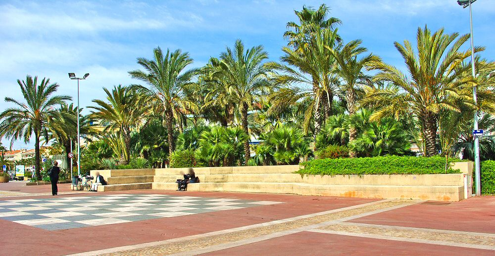 Une place sublime aux multiples palmiers - Wonderfull place with all palm trees